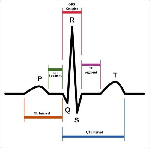 How Does Conduction System of the Heart Work?   New Health ...