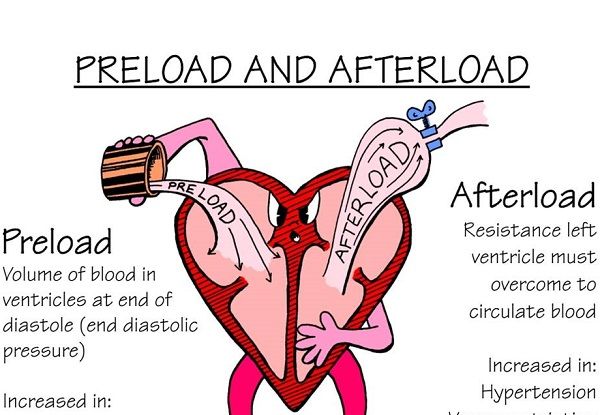 What Are Preload and Afterload? | New Health Advisor