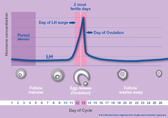 relationship between body temperature and ovulation