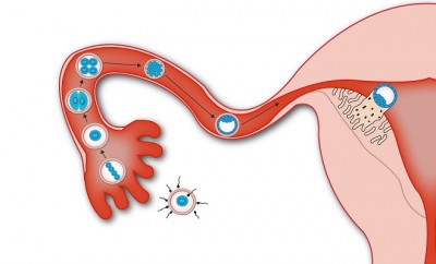 10 Possible Signs of Implantation You Will Want to Know ...