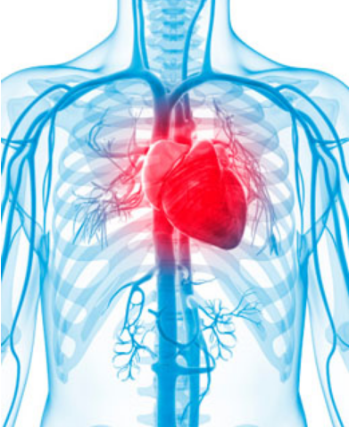 do you know the heart location? | new health advisor, Human Body