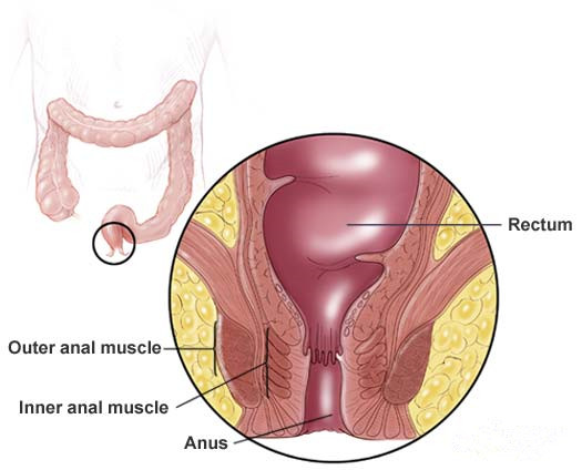 tender part near anus