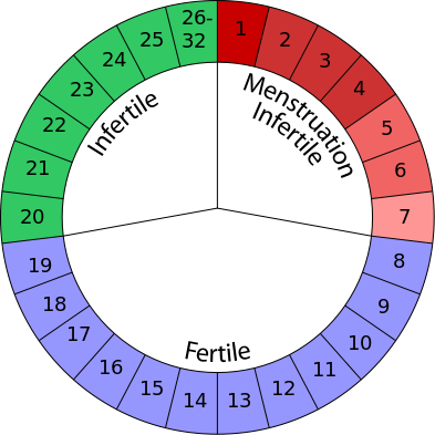 menstrual cycle when are you most fertile