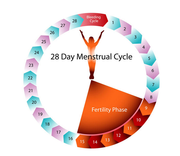 Protected Sex During Ovulation 40