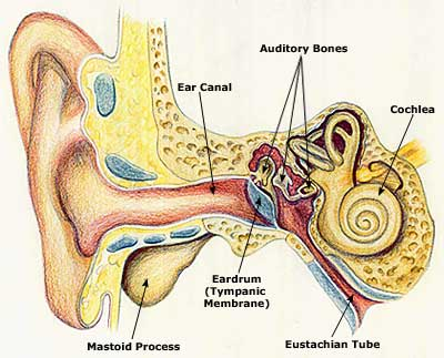 Chronic ear infections know your causes signs treatments new fluids inside the middle ear can get trapped when travelling through the eustachian tube on its normal route to the back of the throat ccuart Choice Image