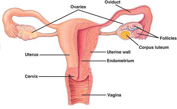 Pain in ovaries after sex bikini galleries 65