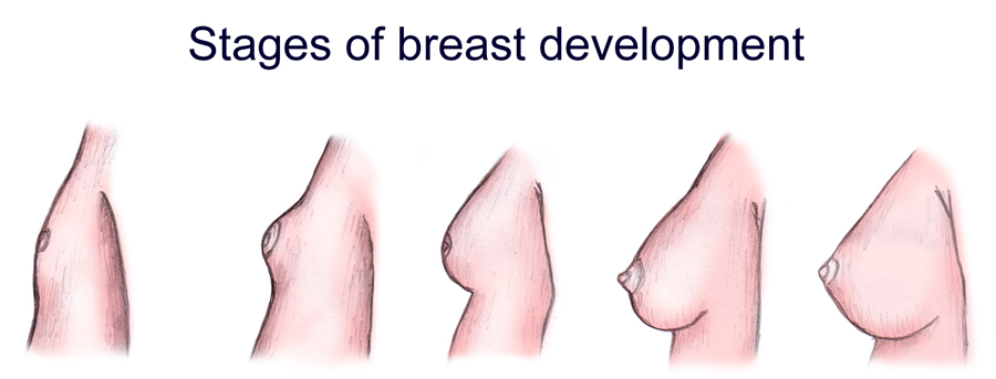how-breasts-develope-pics