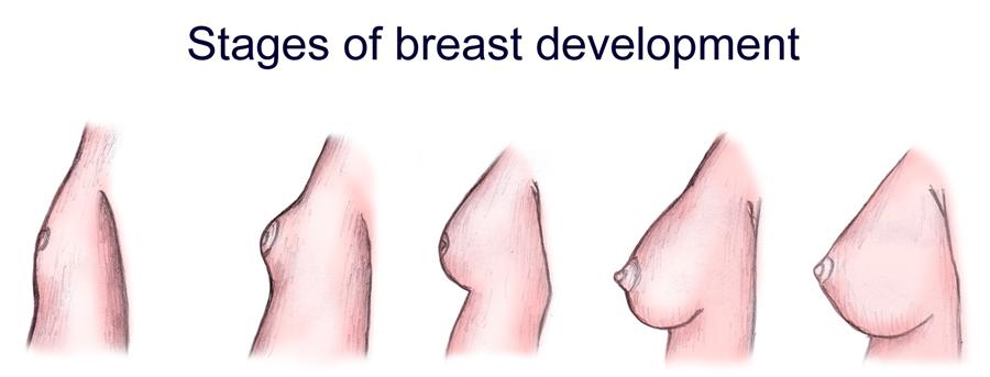 Puberty for girls symptoms boobs, courtney pakiz nude
