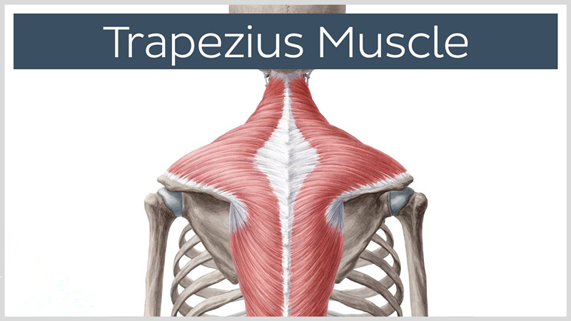 Trapezius Muscle Spasm: Symptoms, Causes and Treatments | New ...