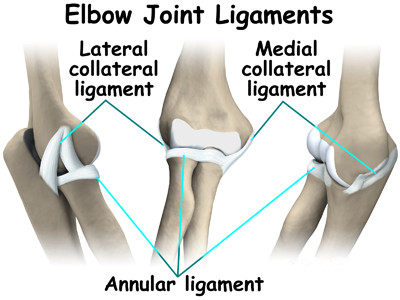 3 Elbow Ligaments: Functions and Injury Treatment | New Health Advisor
