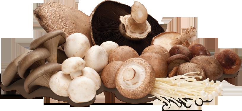 Are Mushrooms A Vegetable New Health Advisor