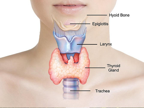 thyroid and obesity an intriguing relationship