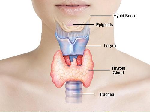 Image result for थाइराइड