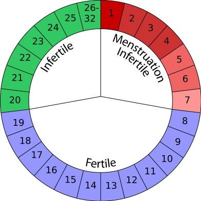How to Calculate Menstrual Cycle