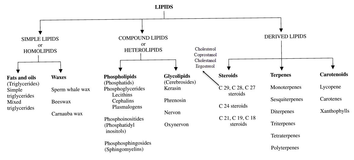 Fat Lipid 9