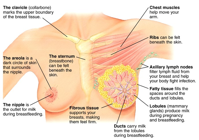 cancer Breast of