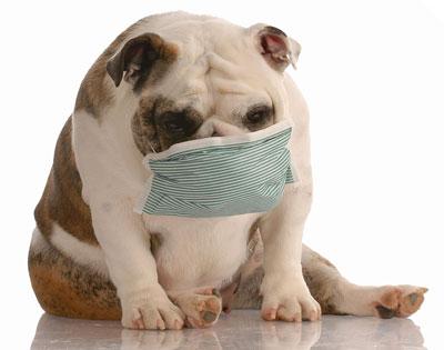 Natural For Hematemesis Dogs