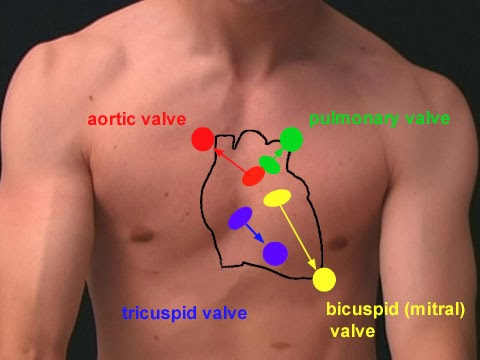 Which Side of Chest Is the Heart On? | New Health Advisor