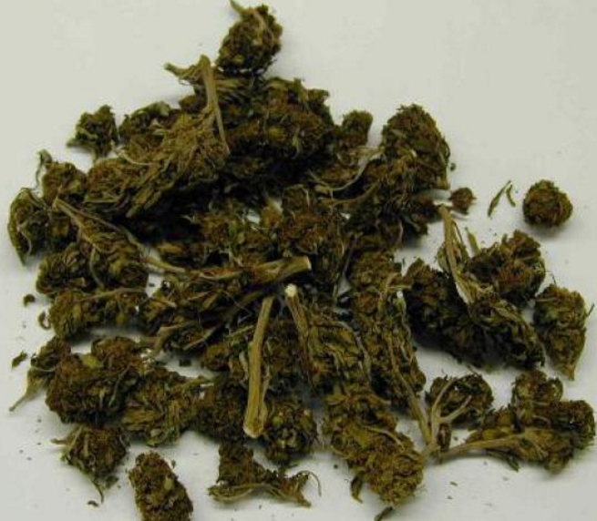 a description of marijuana as a green brown or gray mixture Marijuana (cannabis) is a green, brown or gray mixture of dried, shredded leaves, stems, seeds and flowers of the hemp plant cannabis sativa marijuana is used as a psychoactive (ie mind altering) recreational drug, for certain medical ailments and for religious and spiritual purposes.