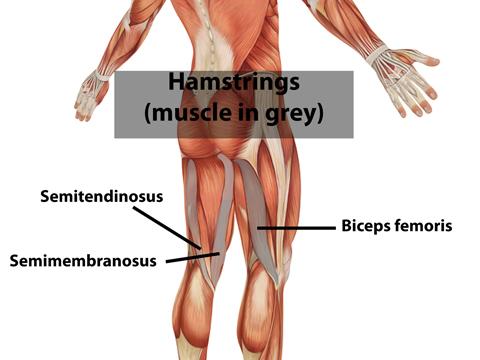 High Hamstring Tendinopathy: Symptoms, Causes and Treatment ...