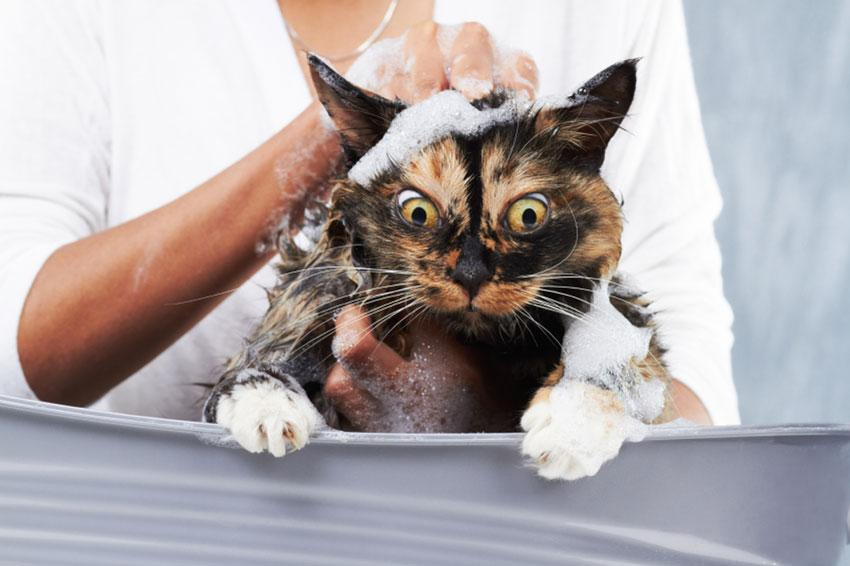 Do You Have To Bathe Your Cat