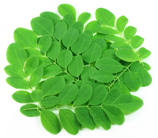 how to use moringa for weight loss